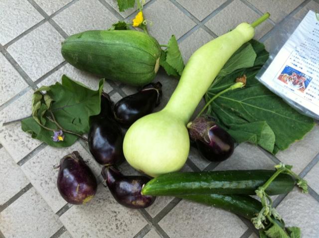 乾さんの野菜IMG_5578